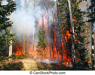 Wildfire - A wildfire burns in a fir and aspen forest.