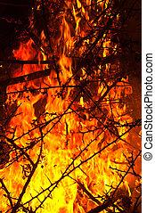 Wildfire burning bush