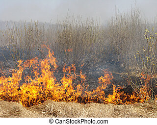 wildfire - burning dry grass at the spring field