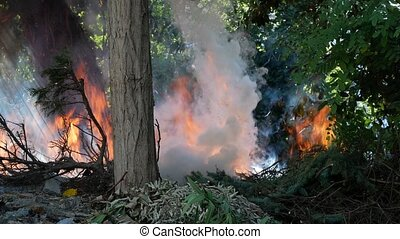 wildfire. close-up of a bright flame in a green forest. 4?, copy space.