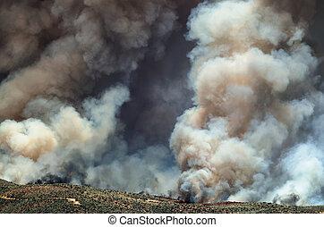 wildfire, dense, déchaînement, levée, fumée, blanc