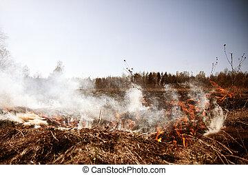 wildfire., fire., 地球温暖化, 環境, catastrophe., 概念, 人, 困っている, 前に,...