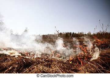 Wildfire. Fire. Global warming, environmental catastrophe. ...