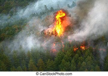 wildfire, fogo, fotografado, floresta, helicóptero