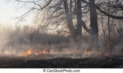 Wildfire - Forest and grassland fire, smoking and burning ...