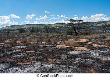 Wildfire in African savanna, Kenya