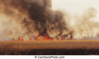 Wildfire in the fields