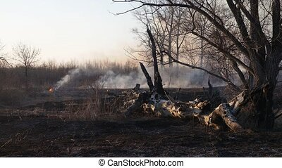 Wildfire - Spring grassland and snag burning in fire, flames...