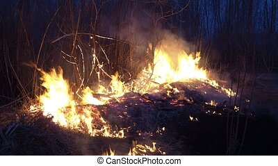 Wildfire - Spring grassland and snag burning in wildfire, ...