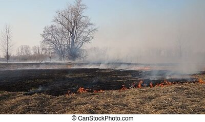 Wildfire - Spring grassland and tree burning in wildfire, ...