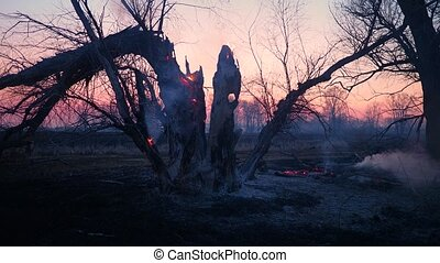 Wildfire - Tree burning and smoking after fire, flames and ...