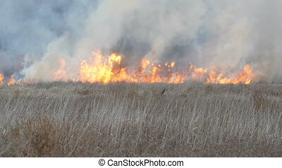 Wildfires or storm fire in the forest steppe. Huge amount of...