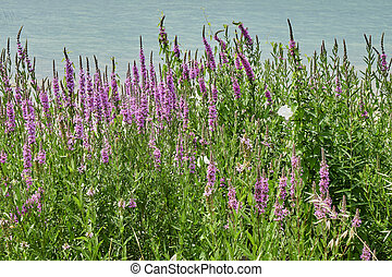 wildflower at wind on lake