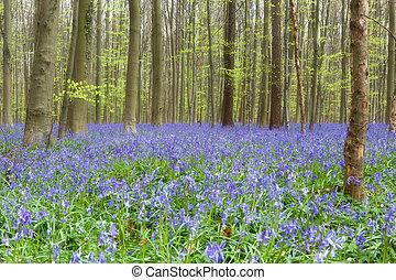Wildflower bluebells forest