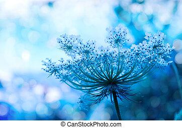 wildflower, fond