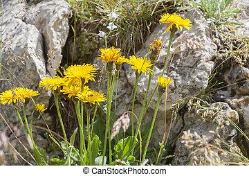 wildflower in the meadow