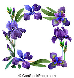 Wildflower iris flower frame in a watercolor style isolated....