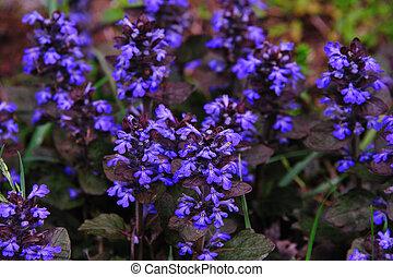 wildflower, -, klimop, grond