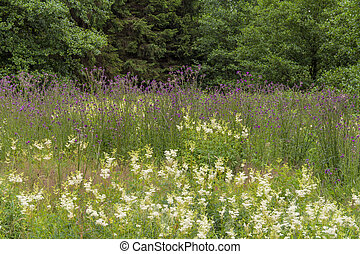 wildflower meadow at the edge of a wood