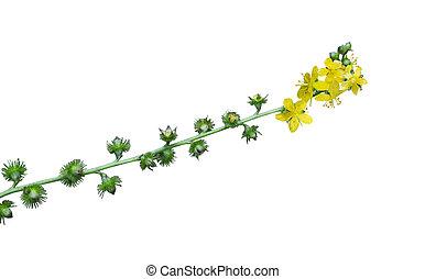 Wildflower,  odermennige