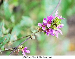Wildflower on a blurred background