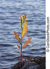 wildflower on rock at lake