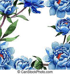 Рамка цветка пиона в акварельном стиле. Полное название растения: голубой пион. Акварельный дикий цветок для фона, текстуры, рисунка обертки, рамки или бордюра.