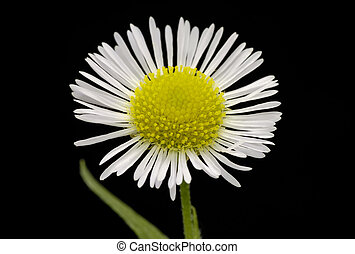 wildflower