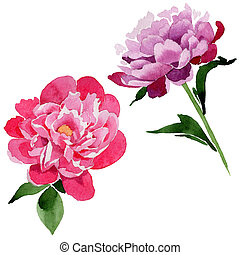 The Semicircular Frame Of Pink Flowers In Watercolor Isolated On A