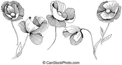 Изолированный цветок мака в векторном стиле. Полное название растения:    маки. Векторный полевой цветок для фона, текстуры, узора обертки, рамки или бордюра.