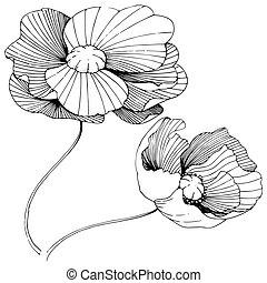 Полевой цветок мак цветок в векторном стиле изолированный. Полное название растения: мак. Векторный полевой цветок для фона, текстуры, узора обертки, рамки или бордюра.