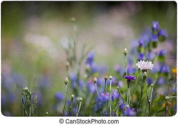 wildflower, pré, fond