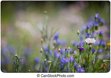 wildflower, pradera, plano de fondo