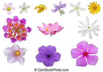 Wildflower Set