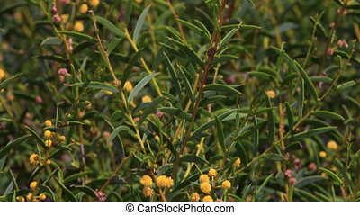 Wildflower shot and branches of leaves - A medium shot of...