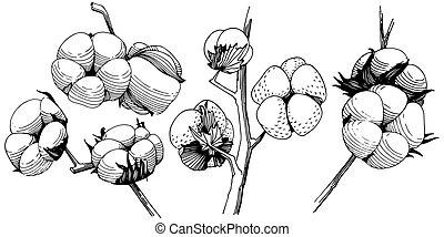 wildflower, vecteur, isolated., style, coton, fleur