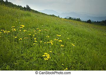 wildflowers, à, carver\'s, trouée