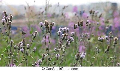 wildflowers - agrimony flowers