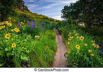 Wildflowers along a trail, at Tom McCall Nature Preserve,...