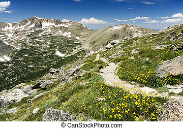 Wildflowers Along Hiking Trail in Colorado Mountains