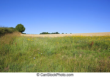 wildflowers and barley