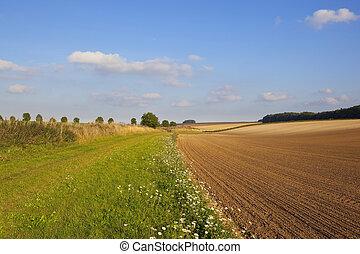 wildflowers and bridleway