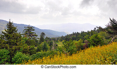 Wildflowers and spruce-fir forest landscape along Blue Ridge...