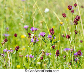 wildflowers at summer time