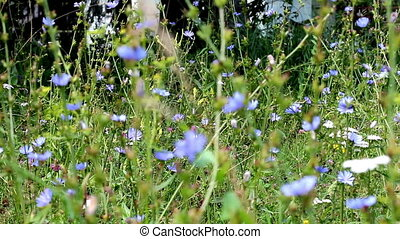 wildflowers - beautiful wild flowers