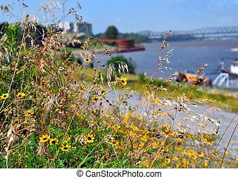 Wildflowers Bloom on Riverfront Park Memphis