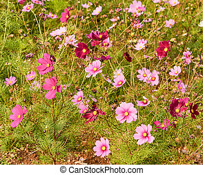 Wildflowers blooming in grassy meadow in Okinawa, Japan