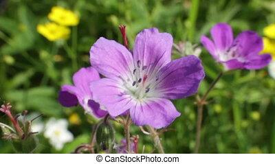 Wildflowers close-up