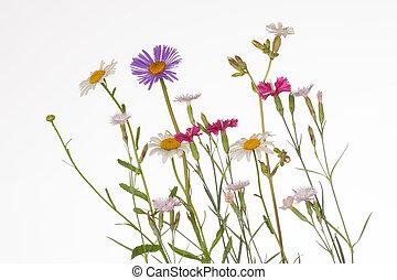 wildflowers, coloré