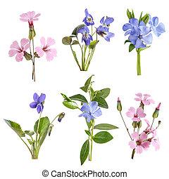 wildflowers, conjunto, aislado